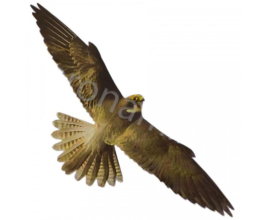 Визуально-динамический отпугиватель птиц - Хищник-2