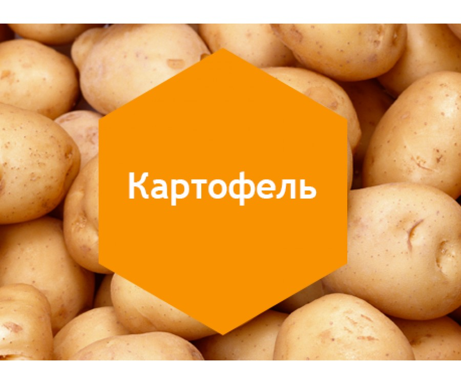 Картофель 1л