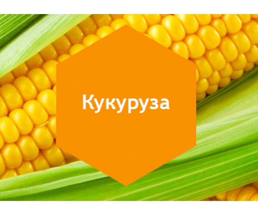Кукуруза 10л